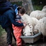 Ausflug Bauernhof-eggers-schaf